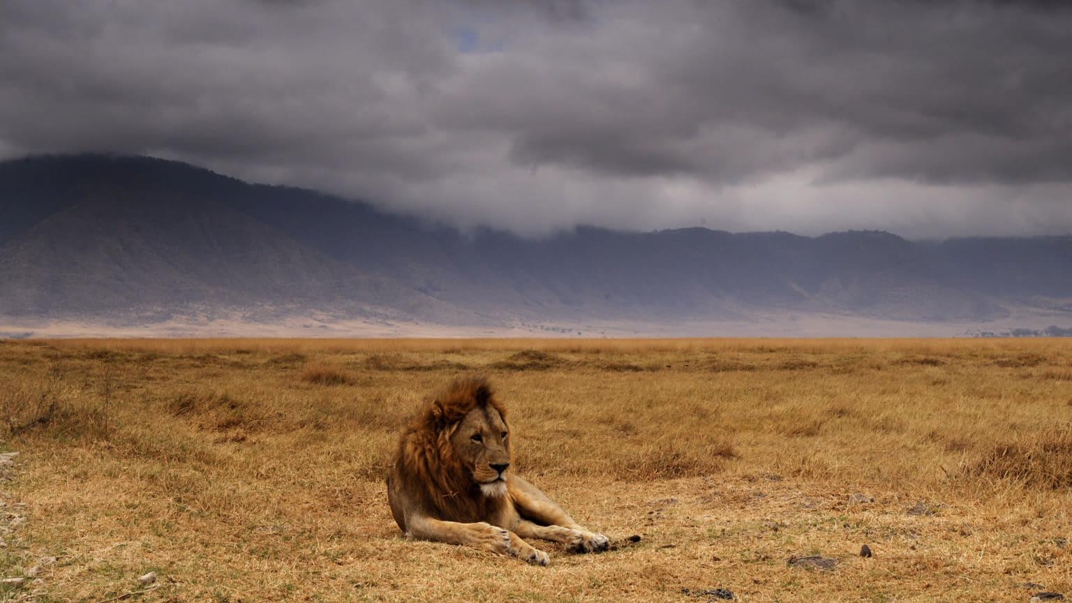 Netflix Serie - Wildest Africa - Nu op Netflix
