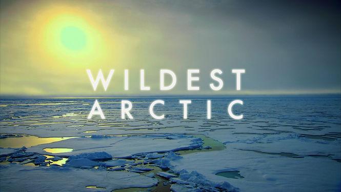 Netflix Serie - Wildest Arctic - Nu op Netflix